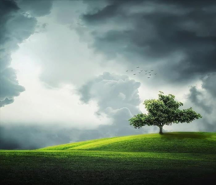A bright green field with one summer tree is surrounded by clouds indicating a storm.